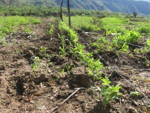 Production agricole biologique